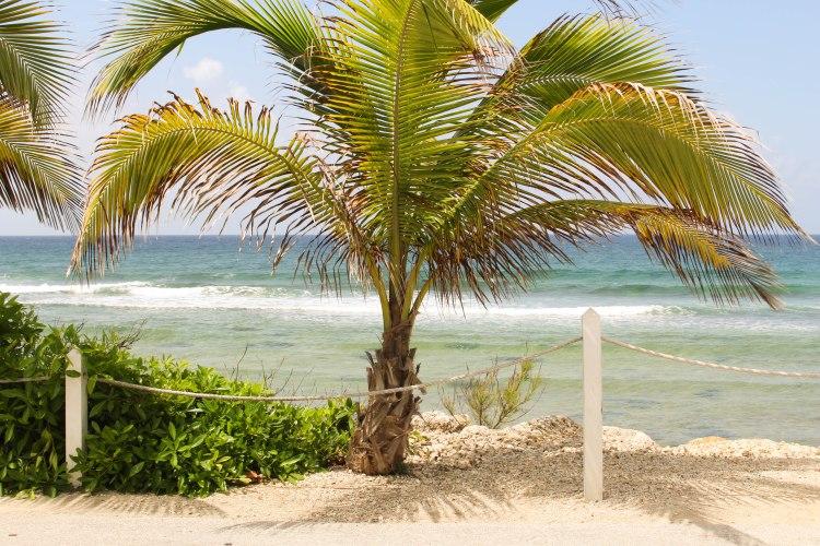 2016 Grand Cayman-67