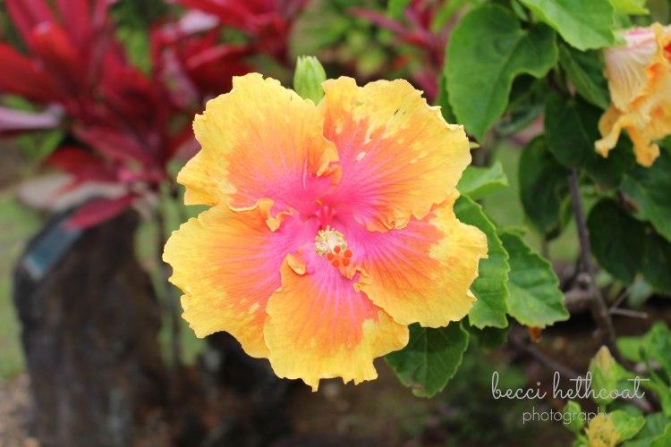 Hawaii_-31